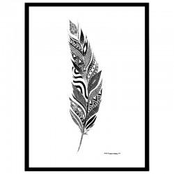 B & W Feather